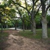 Native Pecan Grove 03