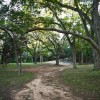 Native Pecan Grove 04
